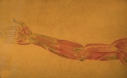 Juan Manuel Blanes - Anatomía